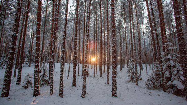 El bosque invernal - Sputnik Mundo