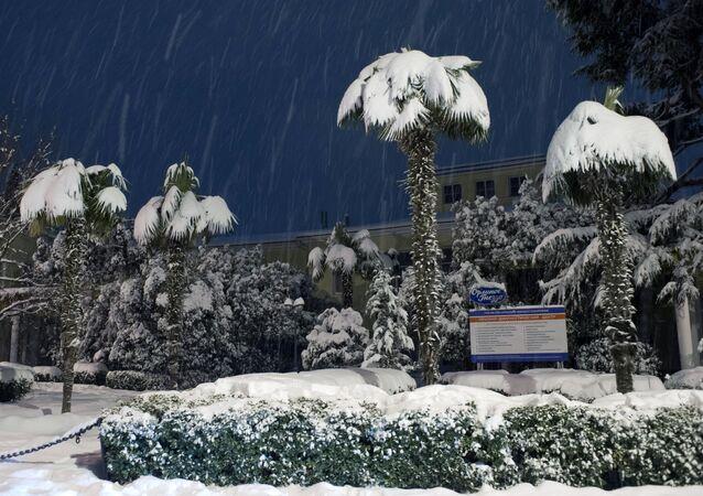 Las palmeras cubiertas de nieve en Yalta