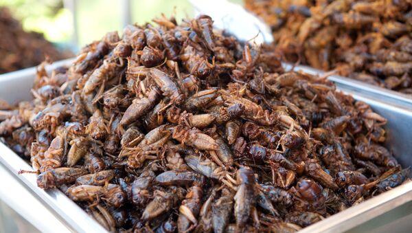 Cucarachas comestibles - Sputnik Mundo