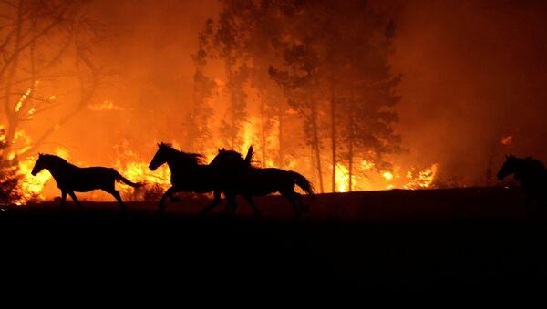 Incendios forestales en Chile - Sputnik Mundo