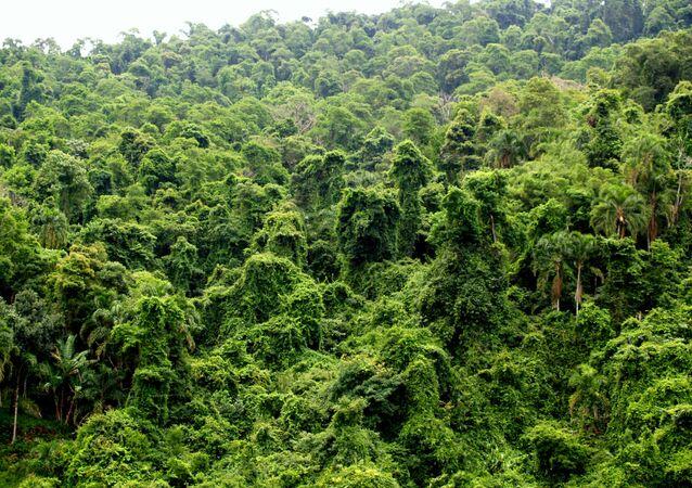 Selva de Brasil (imagen referencial)