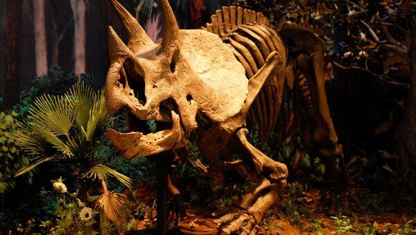 El esqueleto de un dinosaurio (Archivo) - Sputnik Mundo