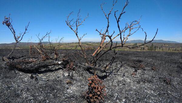 Consecuencias de incendios forestales en Chile - Sputnik Mundo