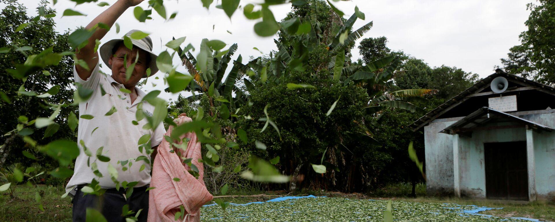 A man spreads coca leaves on the ground to be sun dried outside a church in President Evo Morales' hometown of Villa 14 de Septiembre in the Chapare region in Cochabamba - Sputnik Mundo, 1920, 02.06.2021