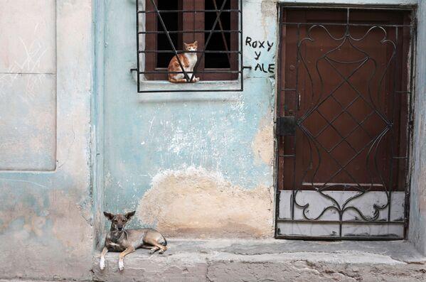 Кошка в окне и собака в районе Старая Гавана - Sputnik Mundo