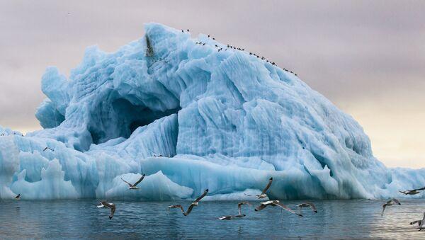 Parque nacional 'Ártico Ruso' - Sputnik Mundo