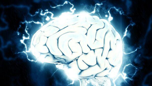 Cerebro (imagen referencial) - Sputnik Mundo