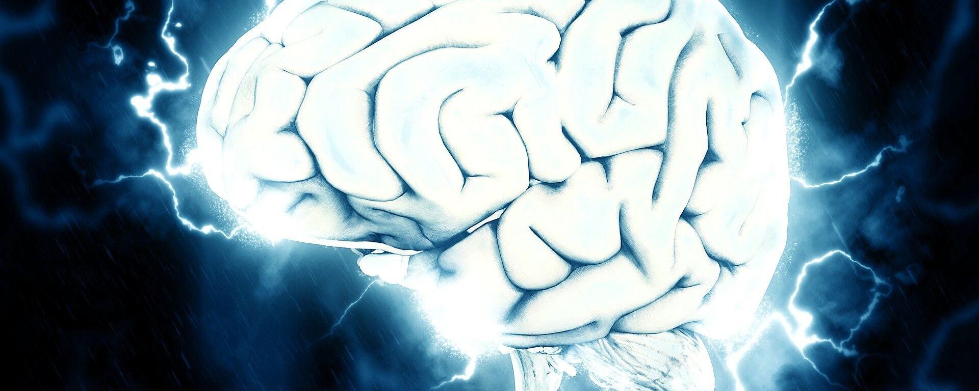 Cerebro (imagen referencial) - Sputnik Mundo, 1920, 26.06.2021