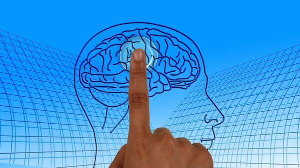 Cerebro humano (ilustración) - Sputnik Mundo