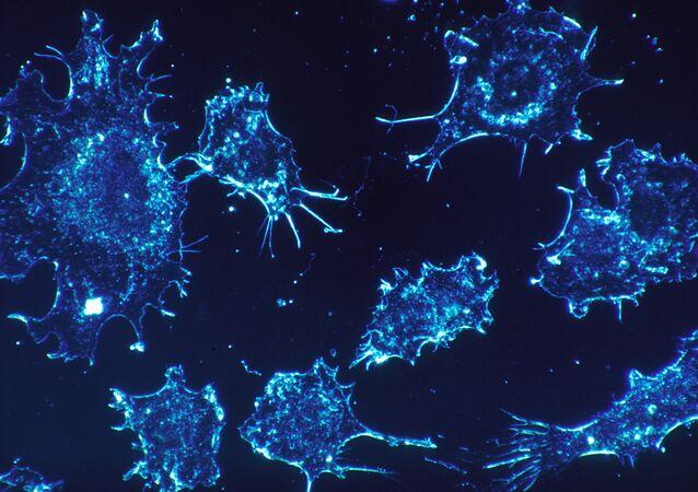 Células de cáncer