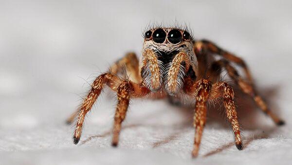 Una araña (archivo) - Sputnik Mundo