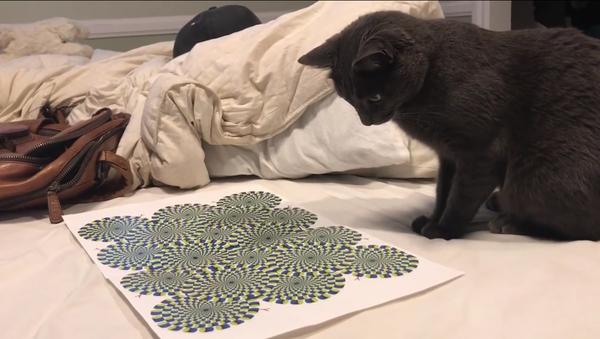 Una ilusión óptica vuelve loco a un gato - Sputnik Mundo