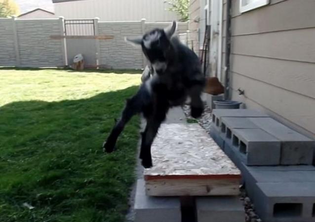 El parkour, el deporte de las cabras