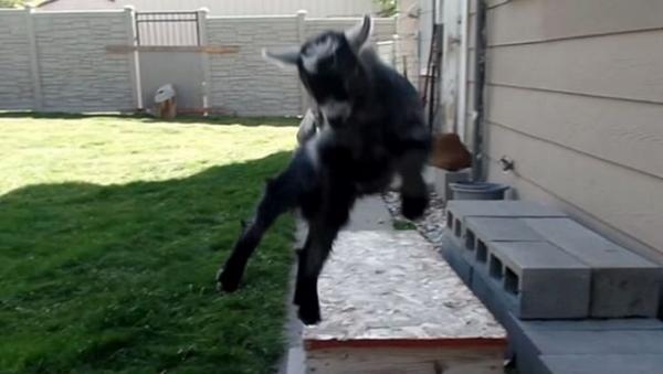 El parkour, el deporte de las cabras - Sputnik Mundo