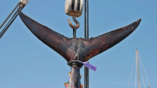 Cola de atún (imagen referencial) - Sputnik Mundo
