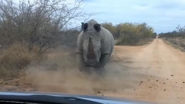 Un rinoceronte-acosador siembra el pánico en Nepal - Sputnik Mundo