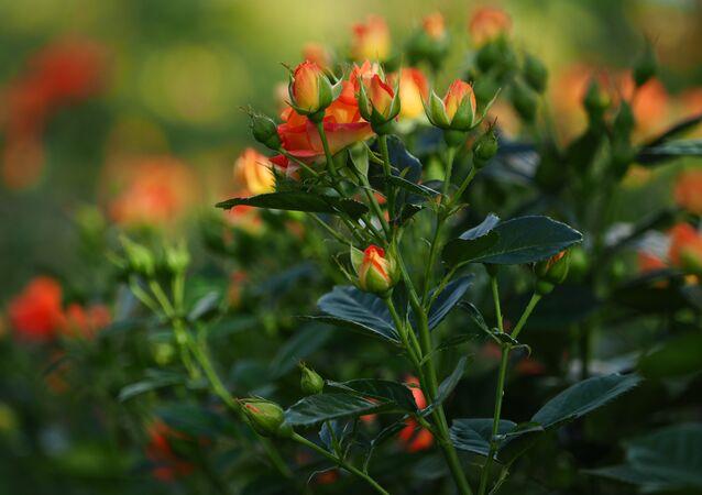 Flores (imagen referencial)