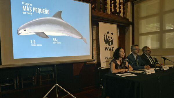 WWF presenta el informe sobre vaquita marina - Sputnik Mundo