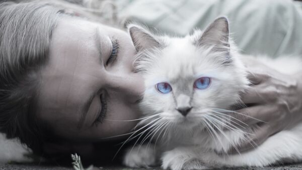 Acariciar gatos - Sputnik Mundo