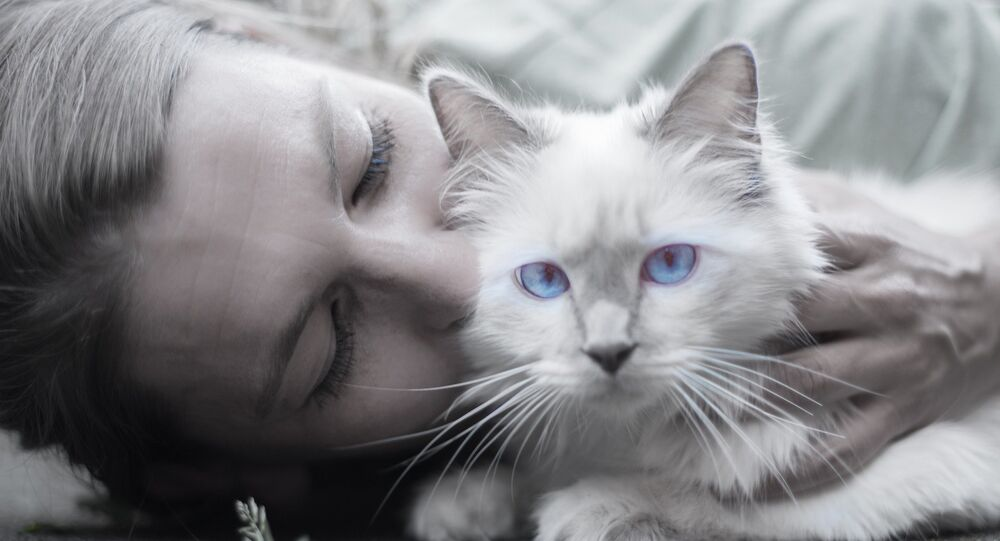 Acariciar gatos