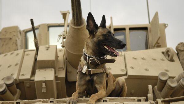 Un perro en el tanque - Sputnik Mundo