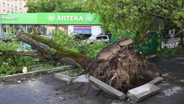 Las consecuencias del huracán de Moscú - Sputnik Mundo