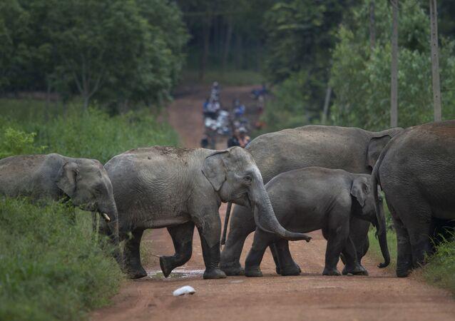 Elefantes salvajes en Tailandia