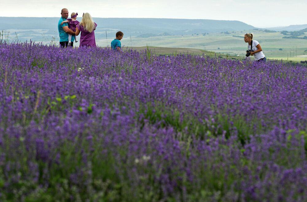 'La Provenza de Crimea': el inolvidable espectáculo del florecimiento de la lavanda