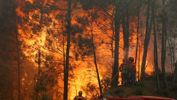 Incendios forestales en Portugal, junio de 2017 - Sputnik Mundo
