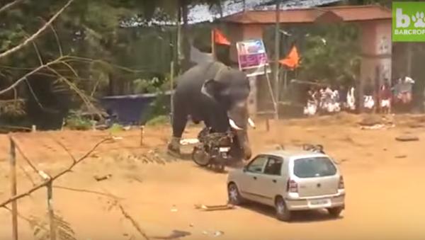 Un elefante enfurecido arma un lío en la India - Sputnik Mundo
