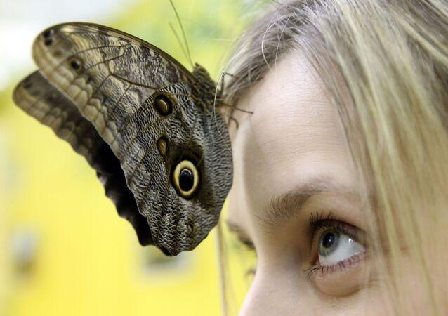 Mariposa viva en el Museo de Kaliningrado