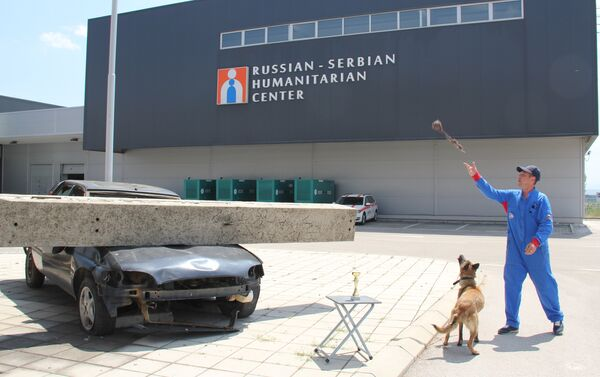 Alpa, la pastor belga malinois del Centro Humanitario Ruso-Serbio - Sputnik Mundo