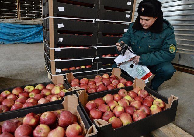 Un empleado del servicio de aduanas ruso analiza las manzanas importadas (imagen referencial)