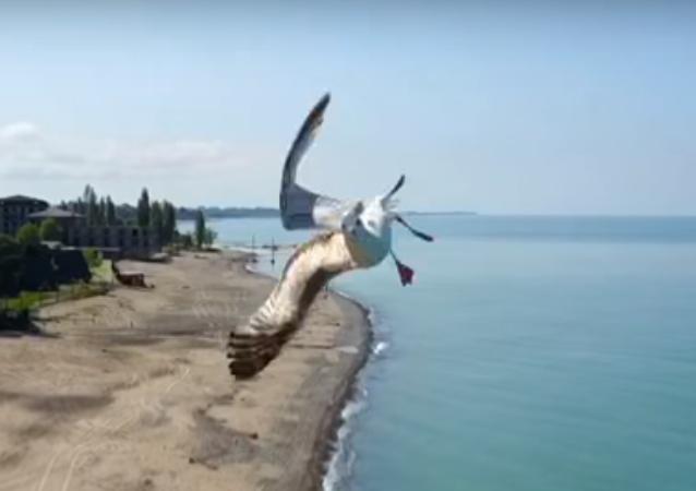 Una audaz gaviota evita colisionar con un dron gracias a una increíble maniobra