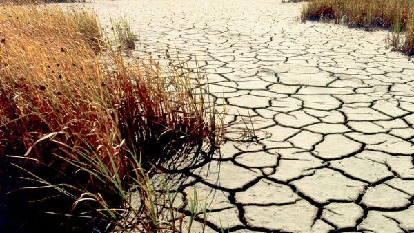 Sequía (imagen referencial) - Sputnik Mundo