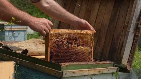 Un apicultor toma un marco con una colmena llena de miel (archivo) - Sputnik Mundo