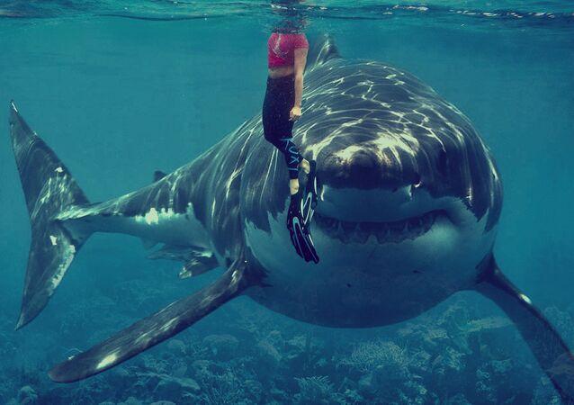 Tiburón blanco y nadadora