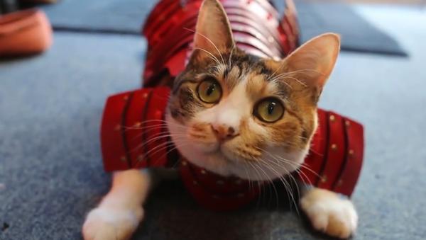 ¡Convierte a tus gatos y perros en samuráis! - Sputnik Mundo