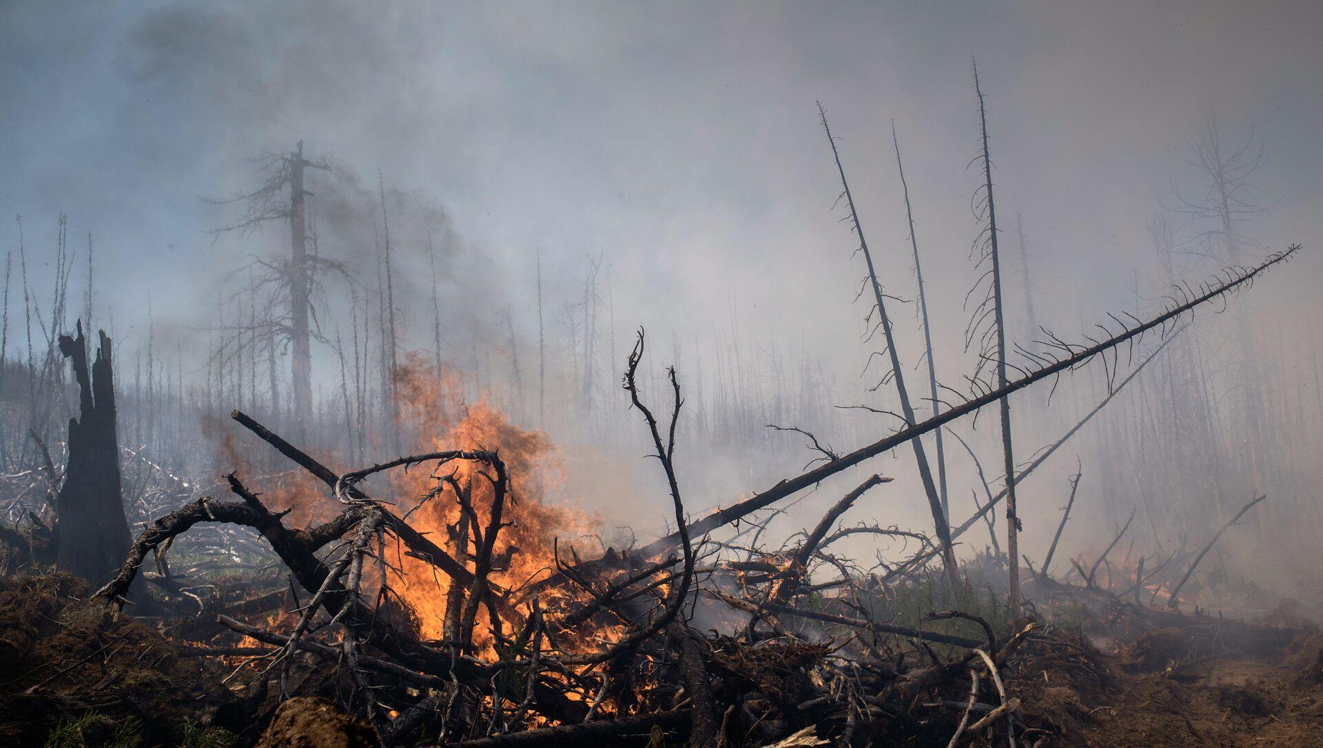 Incendios forestales en el Lejano Oriente ruso (archivo) - Sputnik Mundo, 1920, 08.08.2019