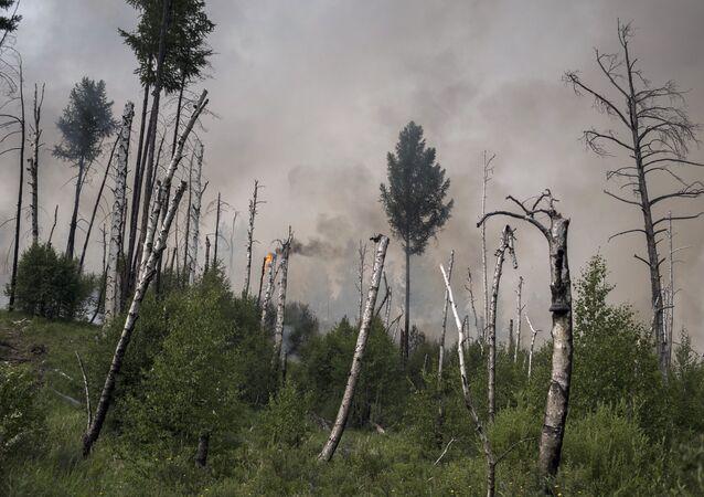 Incendios forestales en el Lejano Oriente ruso (archivo)