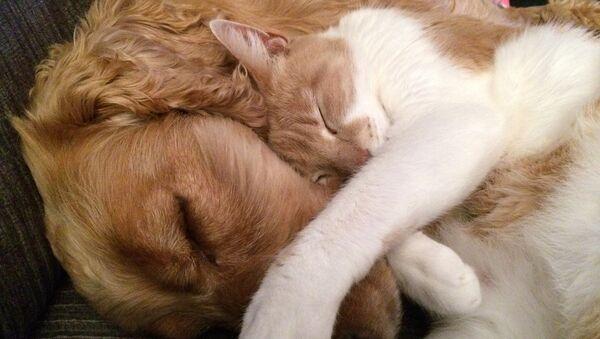 Perro y gato - Sputnik Mundo