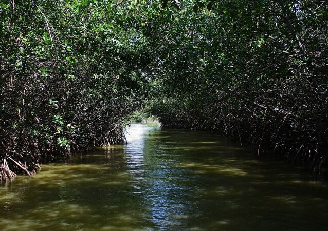 Tumbes manglares (Archivo)