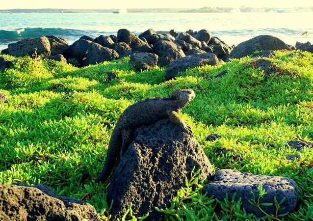 Iguana en las Islas Galápagos