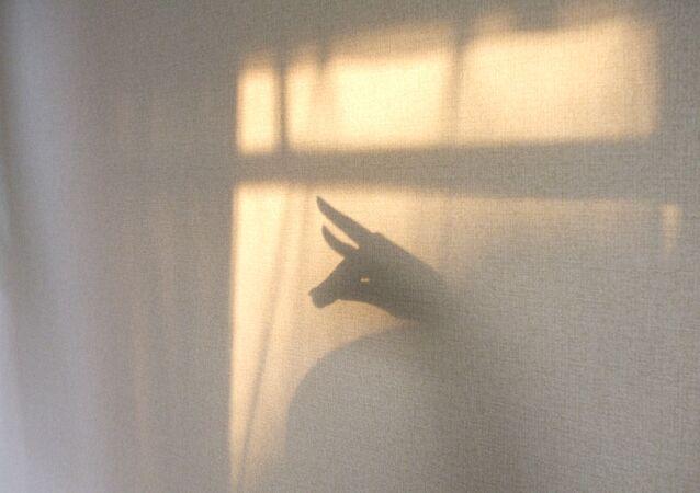Una sombra en la pared (imagen referencial)