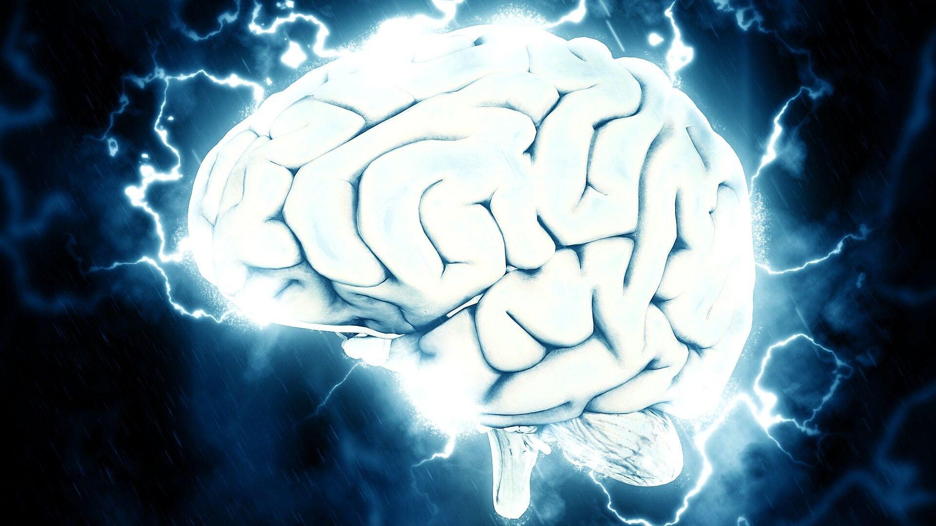 Cerebro, imagen referencial - Sputnik Mundo, 1920, 28.05.2021