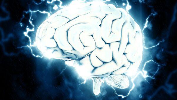 Cerebro, imagen referencial - Sputnik Mundo