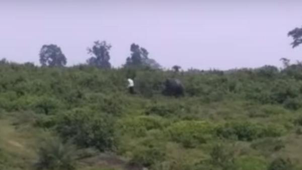 Un elefante aplasta a un hombre mientras se toma una selfi - Sputnik Mundo