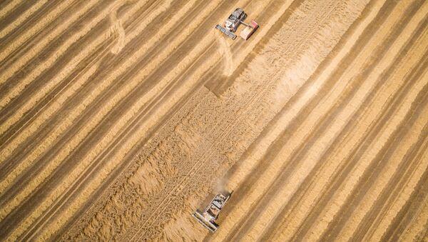 Cosecha de trigo en la región de Krasnodar - Sputnik Mundo