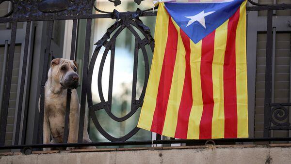 Un perro con Estelada, bandera separatista de Cataluña - Sputnik Mundo