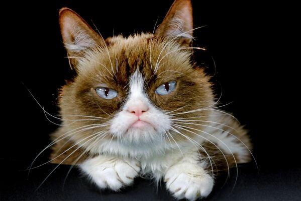 Grumpy Cat (archivo) - Sputnik Mundo
